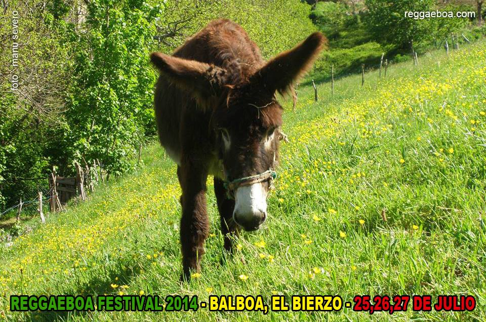 5-edicion-reggaeboa
